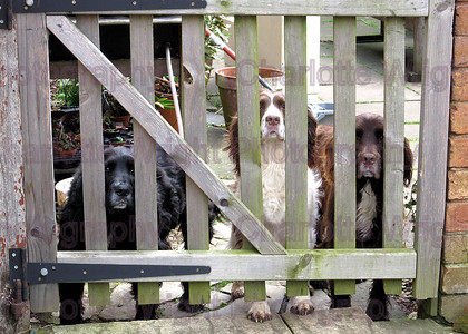 Move2010co 