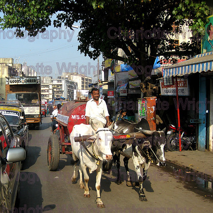 IMG 3594 