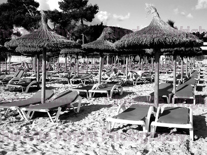 IMG 1376 